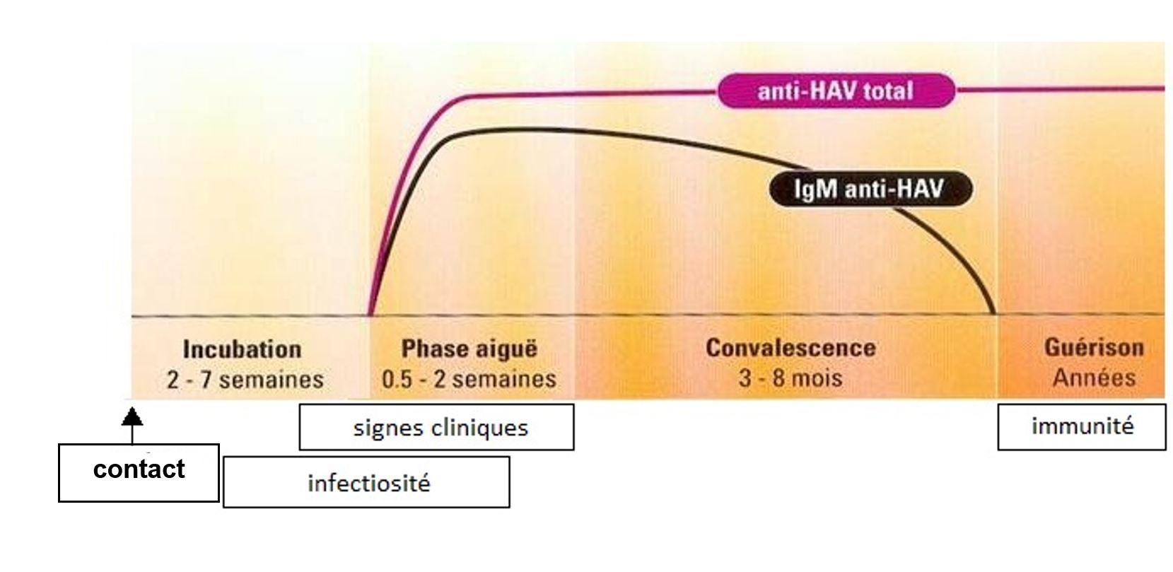 VIDAS® Hépatite - Diagnostic Clinique | bioMérieux France