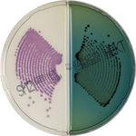 chromID<sup>®</sup> Salmonella / Hektoen  ...